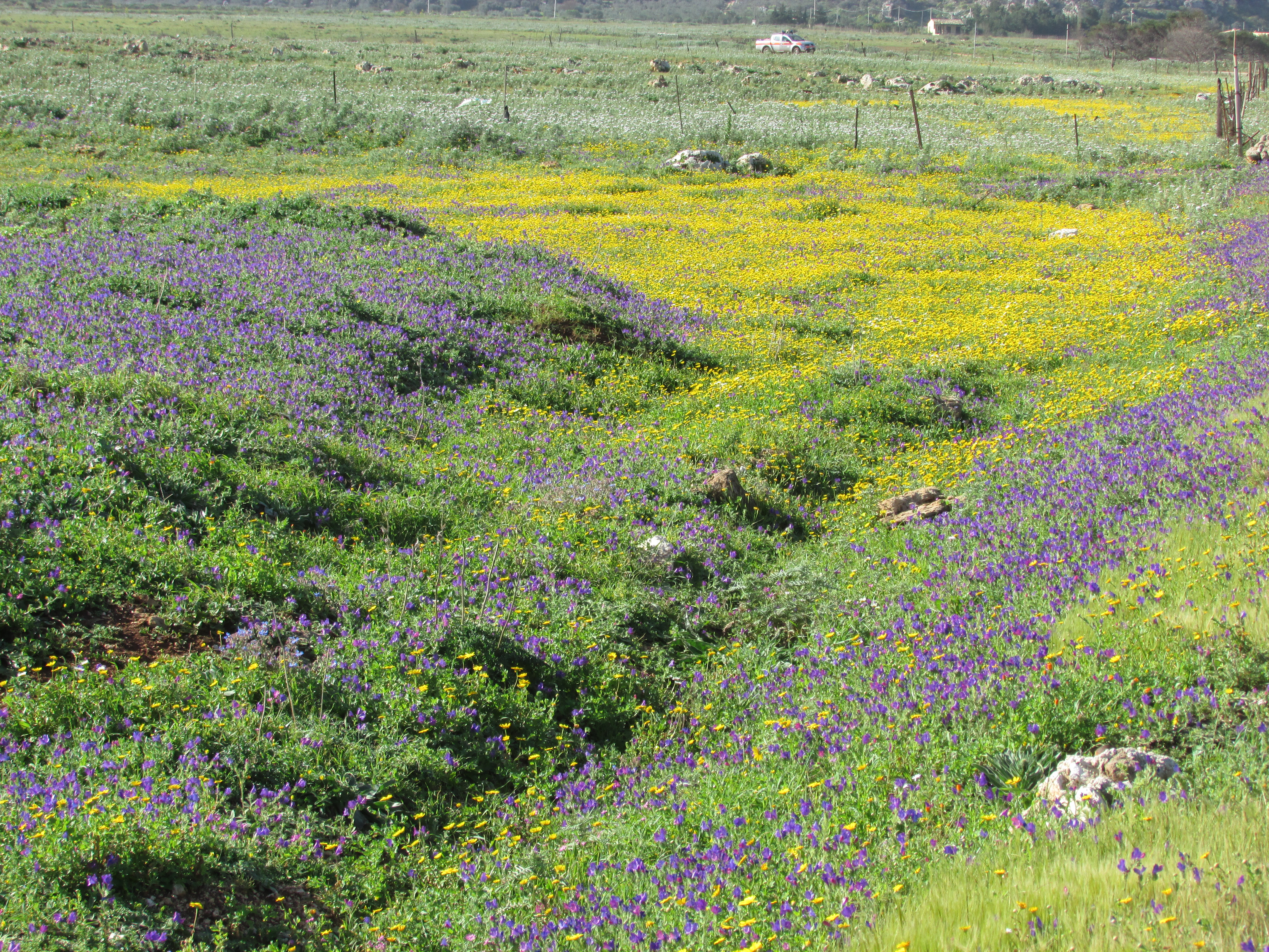 Consider the lilies how luke treats the story of his master by s field of flowers sicily reminiscent of lilies of the field izmirmasajfo